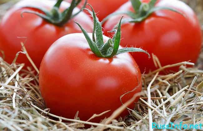 лучшие сорта томатов на 2019 год для теплиц