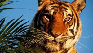 восточный гороскоп на 2017 год Тигр