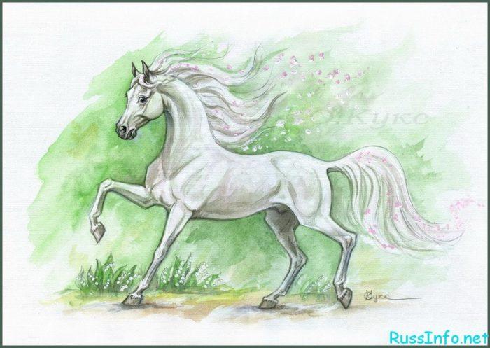 прекрасная белая лошадь