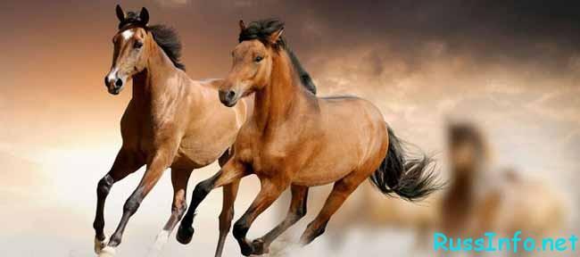 гнедые лошади