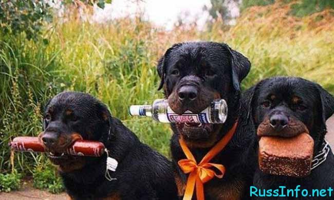 собаки- настоящие мужики