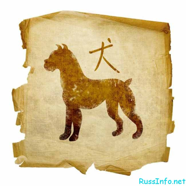 китайская собака-дог