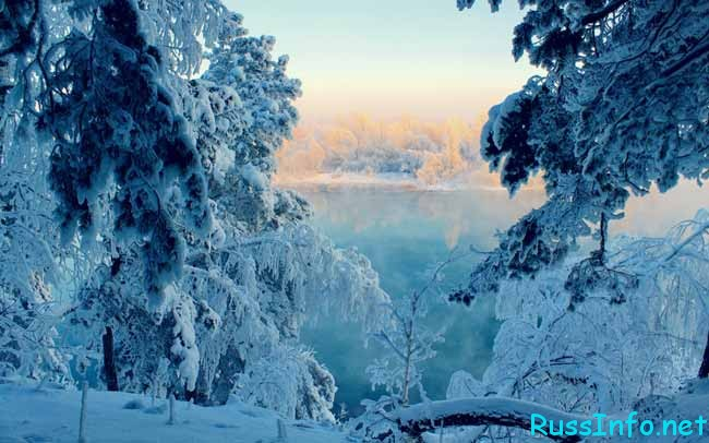 снежные ели