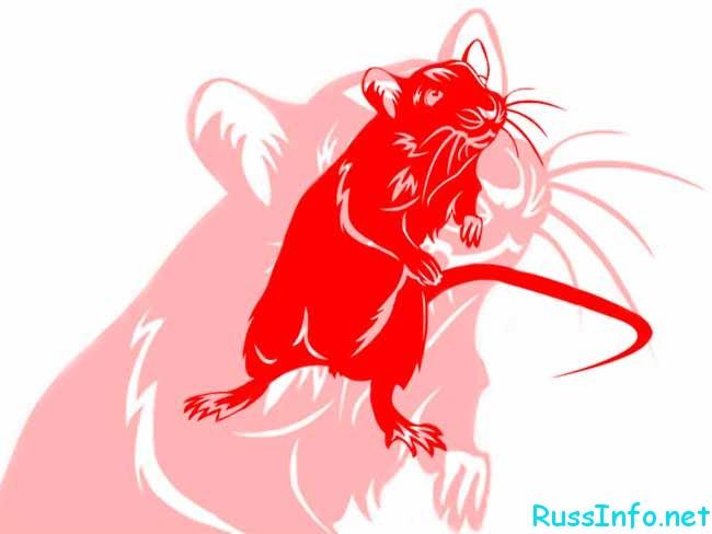 что ждет Крысу в 2019 году по восточному гороскопу