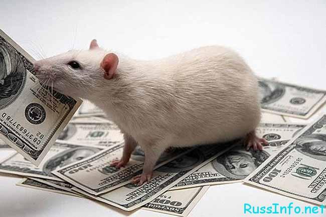 китайский гороскоп по месяцам на 2017 год для крысы