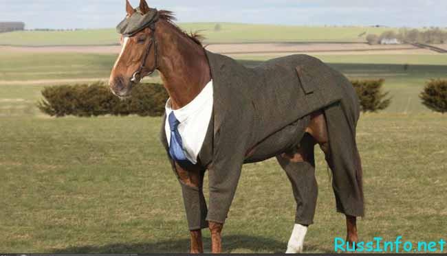 лошадь -стиляга