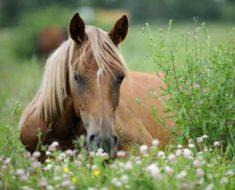 очаровательная лошадь