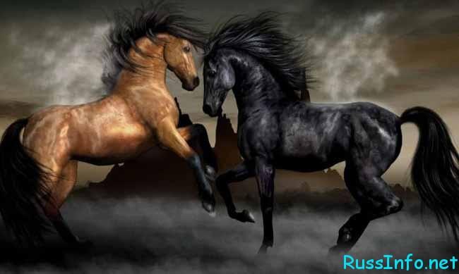 величественные лошади