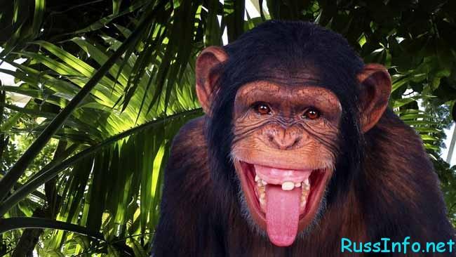 обезьяна с большим языком