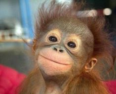 обезьянка-очаровашка