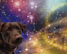китайский гороскоп на октябрь 2019 года для Собаки
