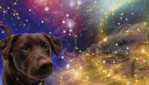 китайский гороскоп на октябрь 2017 года для Собаки