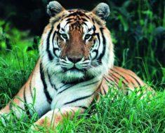 гороскоп женщины Тигра на 2019 год на ноябрь