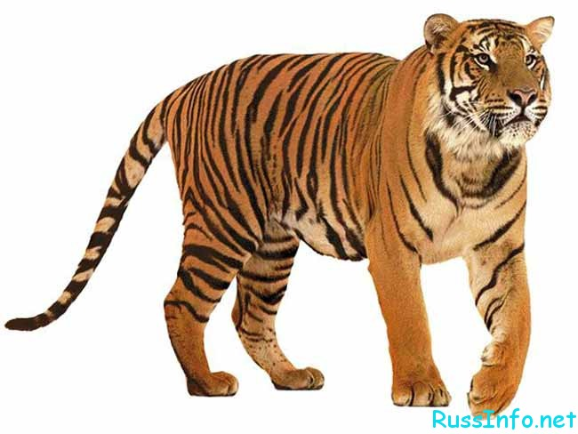восточный (китайский) гороскоп на 2017 год для Тигра на июль