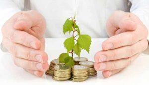 дерево и деньги
