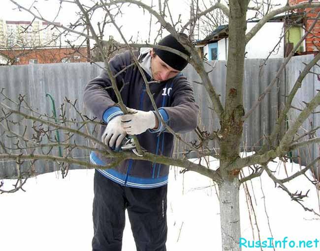 обрезание деревьев