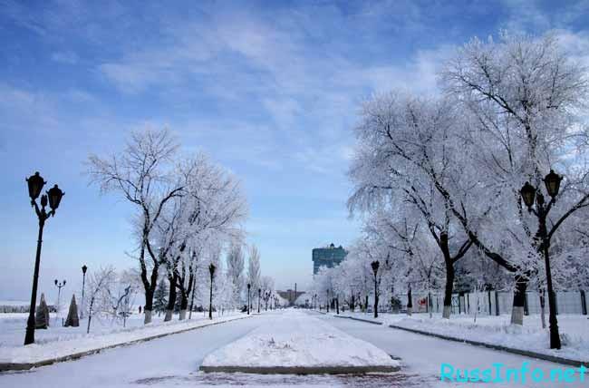 снежная аллея