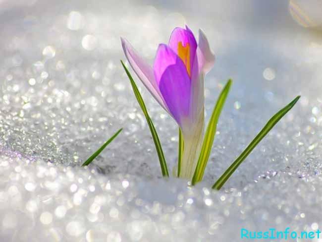 весна в феврале