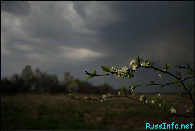 тучи,цветущие деревья