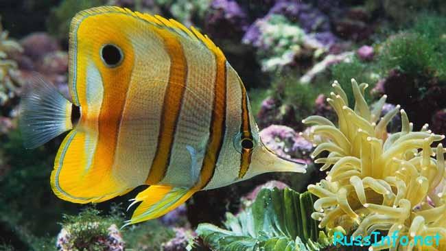знак- Рыбы