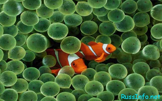 знак-Рыба