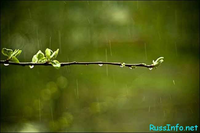 майский дождик