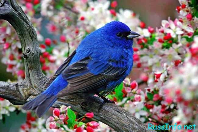 день птиц международного значения