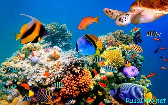Юркие рыбы