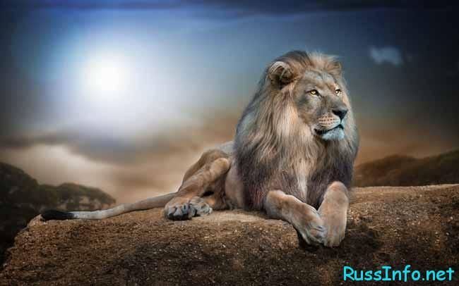 величественный Лев