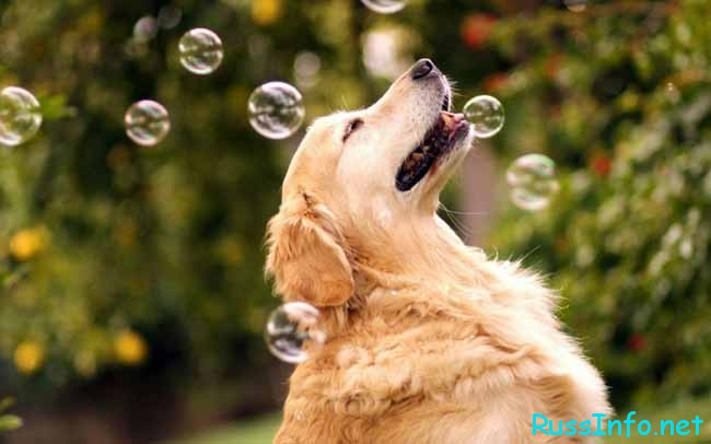 собака и мыльные пузыри