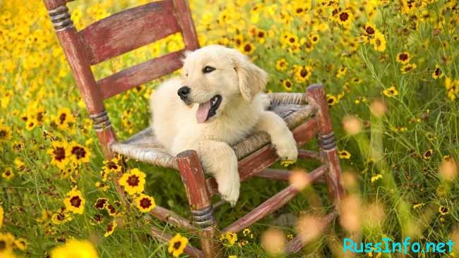 собачка в желтых цветах