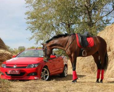 красная машина и лошадь