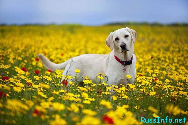 собачка в цветочках