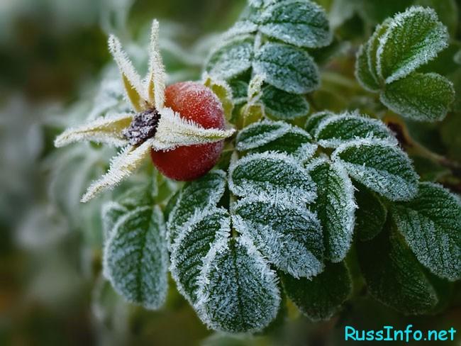 первые морозы