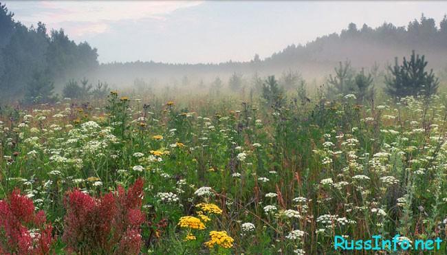 Август - это один из самых прекрасных летних периодов каждого года
