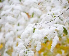 март бывает снежным