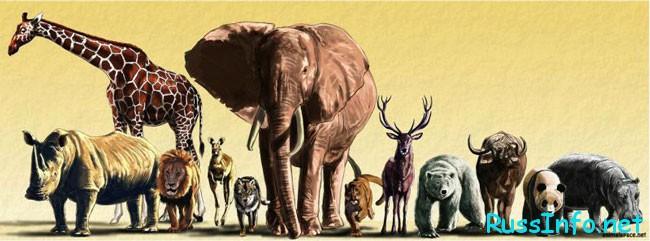 международный праздник, посвященный животным