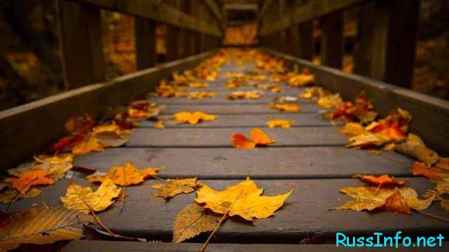 Ноябрь является завершением осеннего сезона.