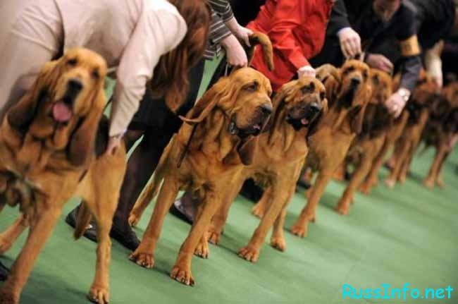 выставки собак