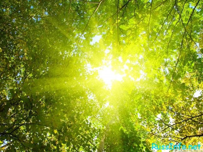 праздник солнцестояния