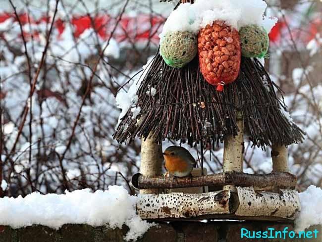 можно накормить голодающих пташек