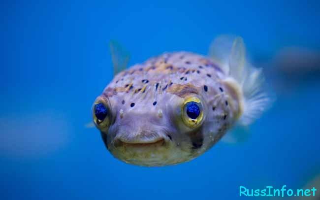 Астрологический прогноз на январь 2018 года для Рыб