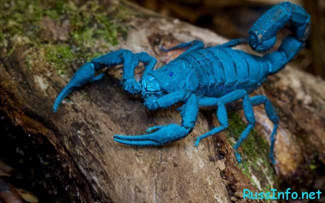 Скорпионам сейчас следует умерить свой пыл