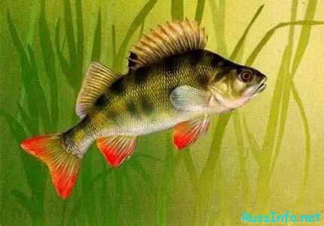 Главная задача для Рыб - это собственная внешность и свое здоровье