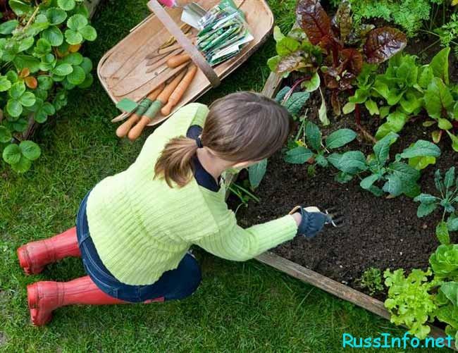 Садоводы и огородники