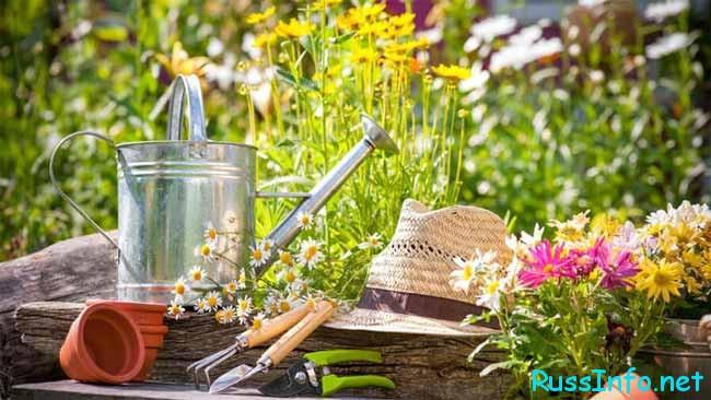 Август - горяча пора для садоводов и огородников