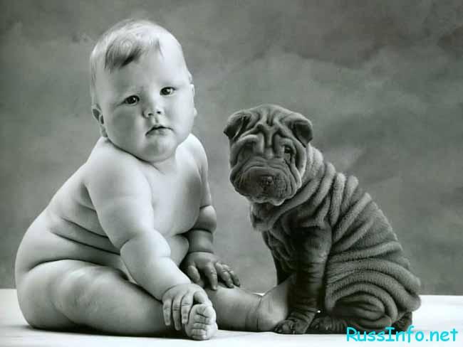 Год собаки заставит работать над своим внутренним миром