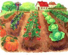 Каждый садовод должен внимательно изучитькалендарь посадки овощей на 2019 год