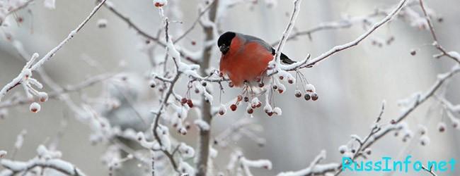 Снег в феврале в Казахстане