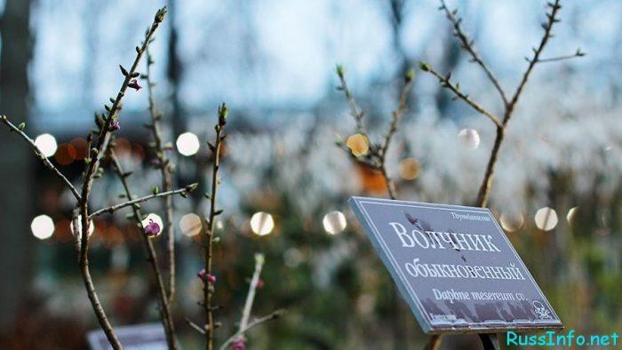 Последние новости о коронавирусе в Москве на 20 марта 2020 года